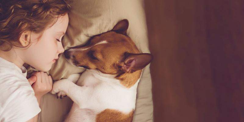 sleeping soundly without bed bugs